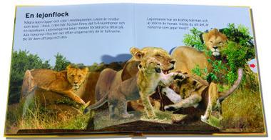 På safari